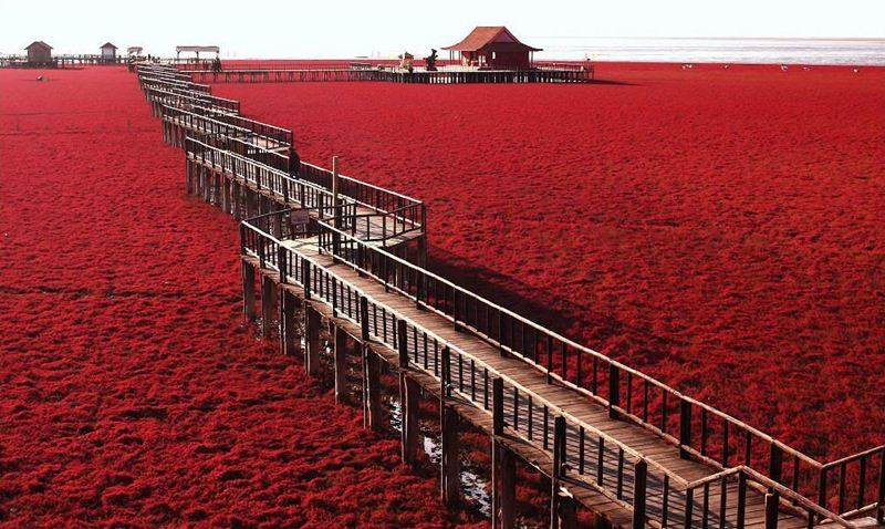 Image result for panjin red beach