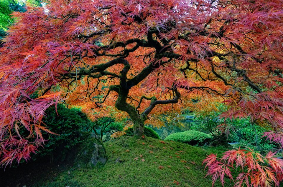 Portland Japanese Garden Living In Harmony With Nature