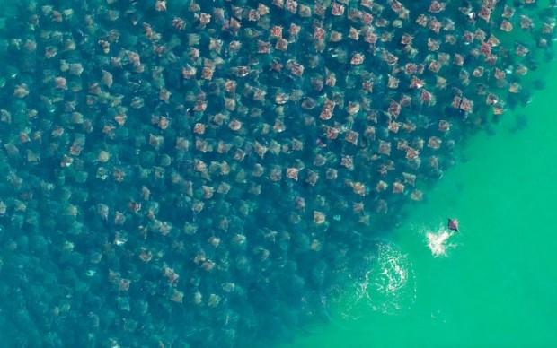 ray migration