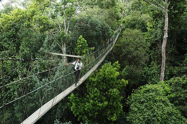 Canopy Walkway in malaysia