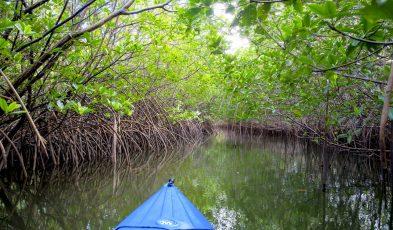 mangrove-kayaking