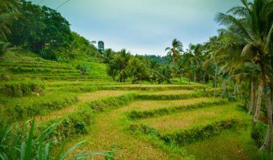 argao rice terraces
