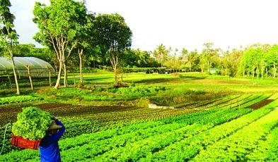 farm experiences near manila