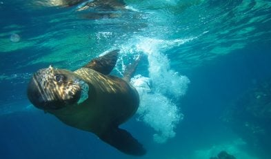 sea lions in Galápagos Islands