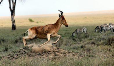 safari destinations around world