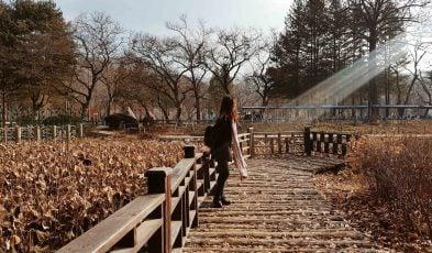 korea 5 days budget travel