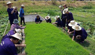 Organic Farming at Sukhothai Airport